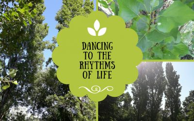 Having solid roots & dancing to the rhythms of life